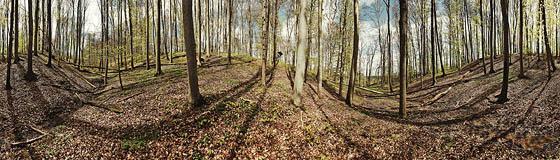 Im Schlangenwald